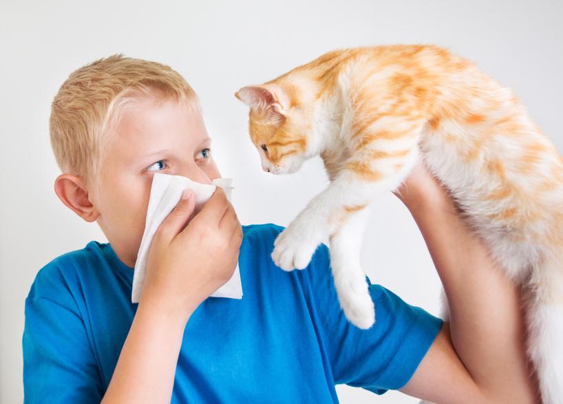 Asthma – Haustier abgeben bei Tierallergie