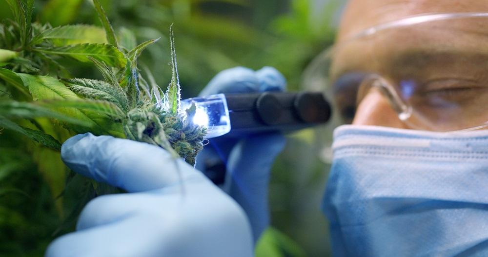 Cannabis als Medizin?